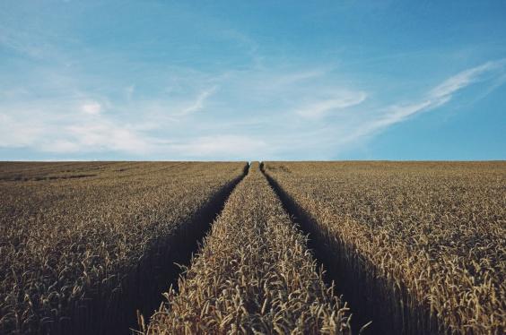 field grain.jpg